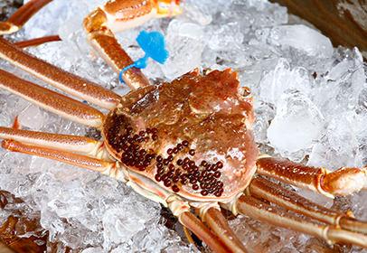 Matsuba Crab